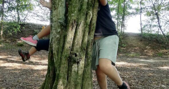 gozdni škratje